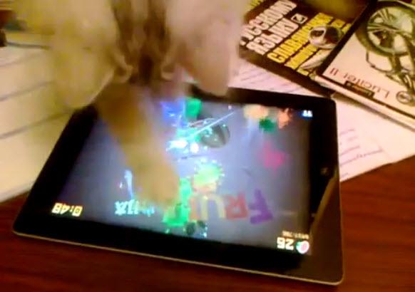 """""""Cat Plays Fruit Ninja on iPad"""""""